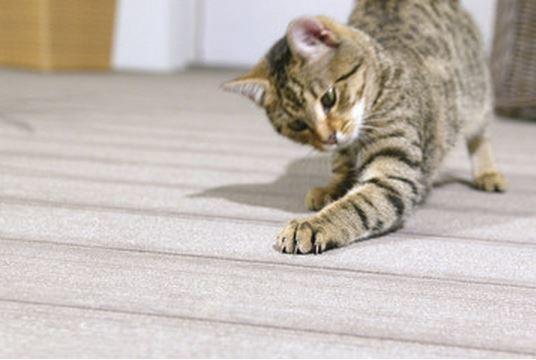 Piso madera sintética deck listón apto para las mascotas