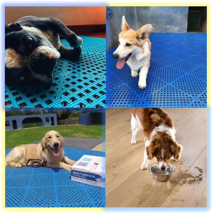 Easydeck Aqua para uso en centros veterinarios Acento Suministros